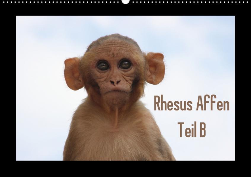 Rhesus Affen Teil B (Wandkalender 2017 DIN A2 quer) - Coverbild