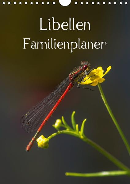 Libellen / Familienplaner (Wandkalender 2017 DIN A4 hoch) - Coverbild