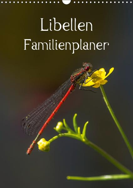 Libellen / Familienplaner (Wandkalender 2017 DIN A3 hoch) - Coverbild