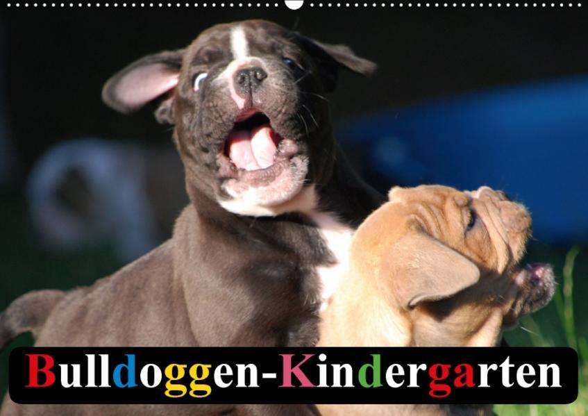 Bulldoggen-Kindergarten (Wandkalender 2017 DIN A2 quer) - Coverbild
