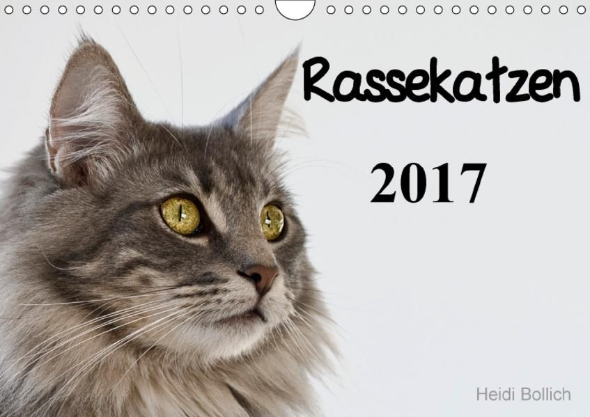 Rassekatzen 2017 (Wandkalender 2017 DIN A4 quer) - Coverbild
