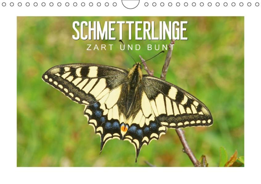 Schmetterlinge: zart und bunt (Wandkalender 2017 DIN A4 quer) - Coverbild