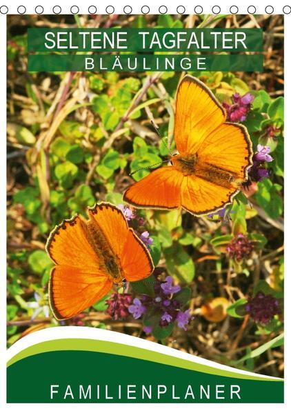 Seltene Tagfalter: Bläulinge / Familienplaner (Tischkalender 2017 DIN A5 hoch) - Coverbild