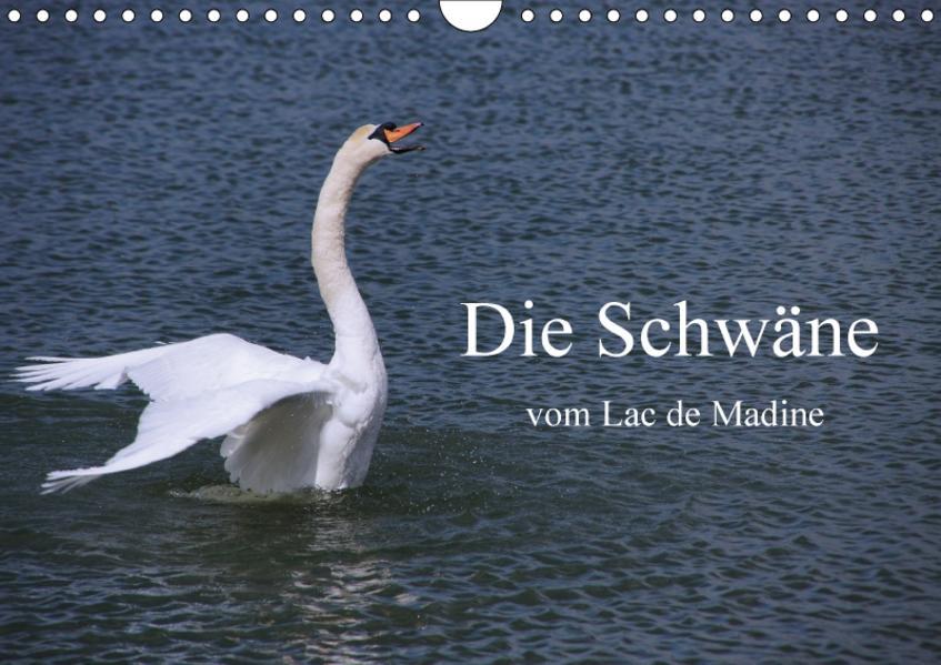 Die Schwäne vom Lac de Madine (Wandkalender 2017 DIN A4 quer) - Coverbild