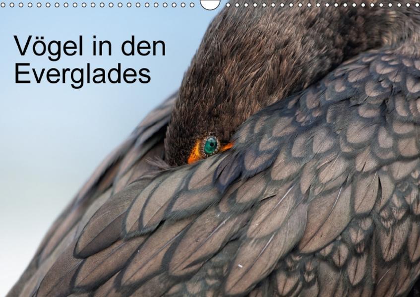 Vögel in den Everglades (Wandkalender 2017 DIN A3 quer) - Coverbild