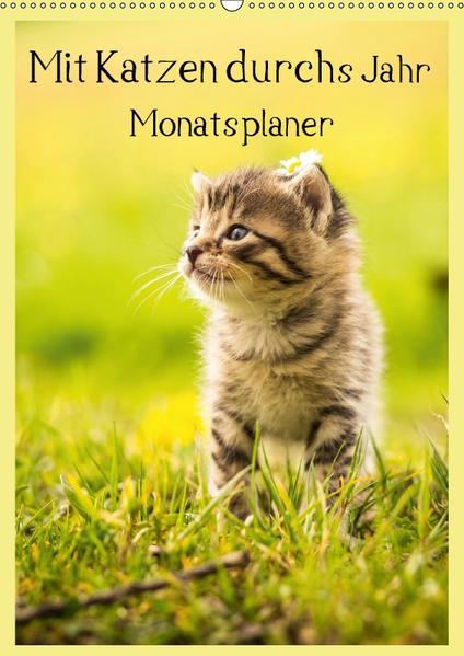 Mit Katzen durchs Jahr / Planer (Wandkalender 2017 DIN A2 hoch) - Coverbild