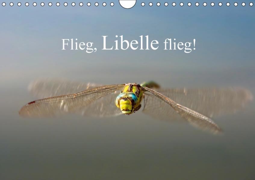 Flieg, Libelle flieg! (Wandkalender 2017 DIN A4 quer) - Coverbild