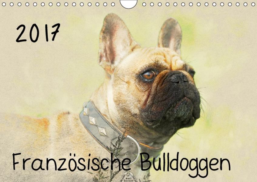 Französische Bulldoggen 2017 (Wandkalender 2017 DIN A4 quer) - Coverbild