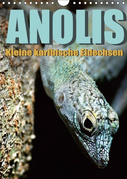 Anolis - Kleine karibische Eidechsen (Wandkalender 2017 DIN A4 hoch) - Coverbild
