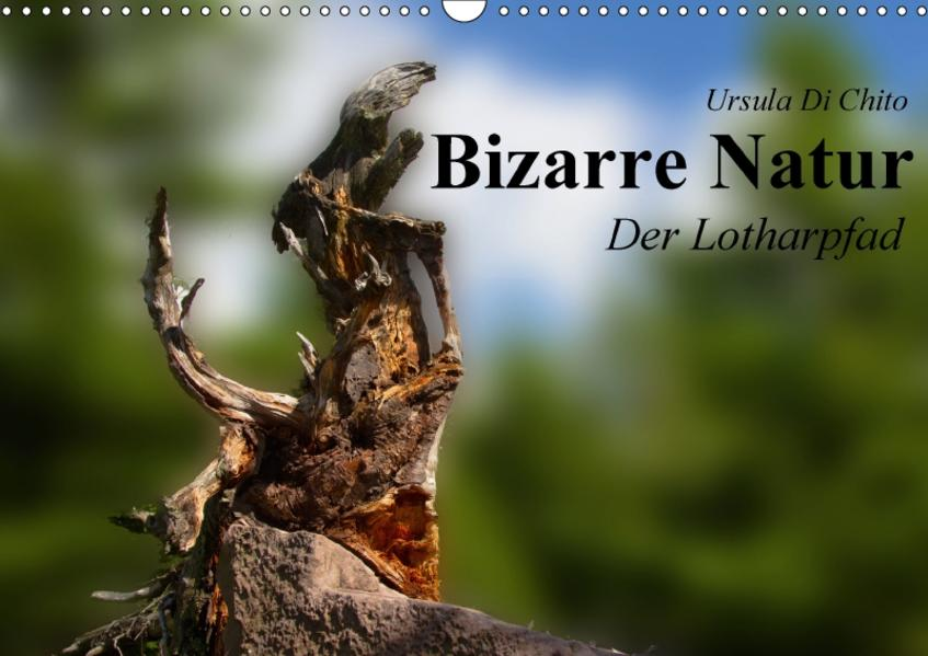 Bizarre Natur – Der Lotharpfad (Wandkalender 2017 DIN A3 quer) - Coverbild