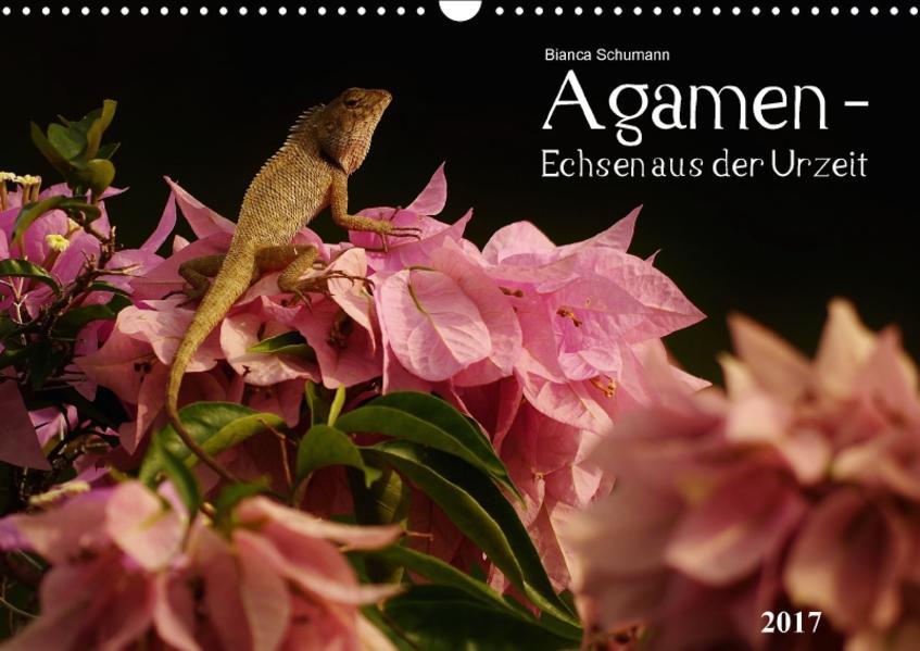 Agamen - Echsen aus der UrzeitCH-Version  (Wandkalender 2017 DIN A3 quer) - Coverbild