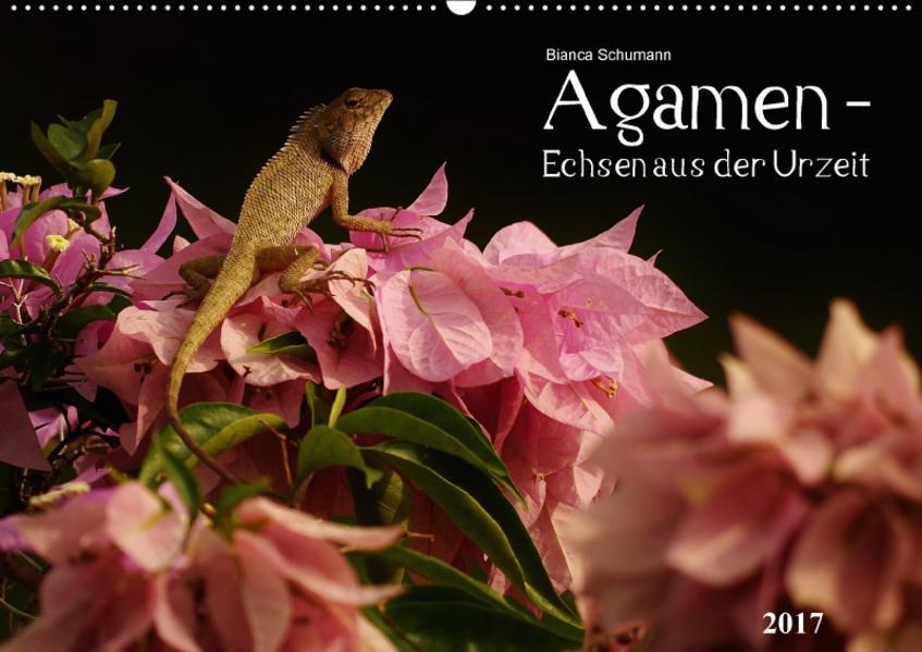 Agamen - Echsen aus der UrzeitCH-Version  (Wandkalender 2017 DIN A2 quer) - Coverbild