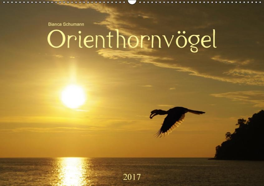 OrienthornvögelCH-Version  (Wandkalender 2017 DIN A2 quer) - Coverbild