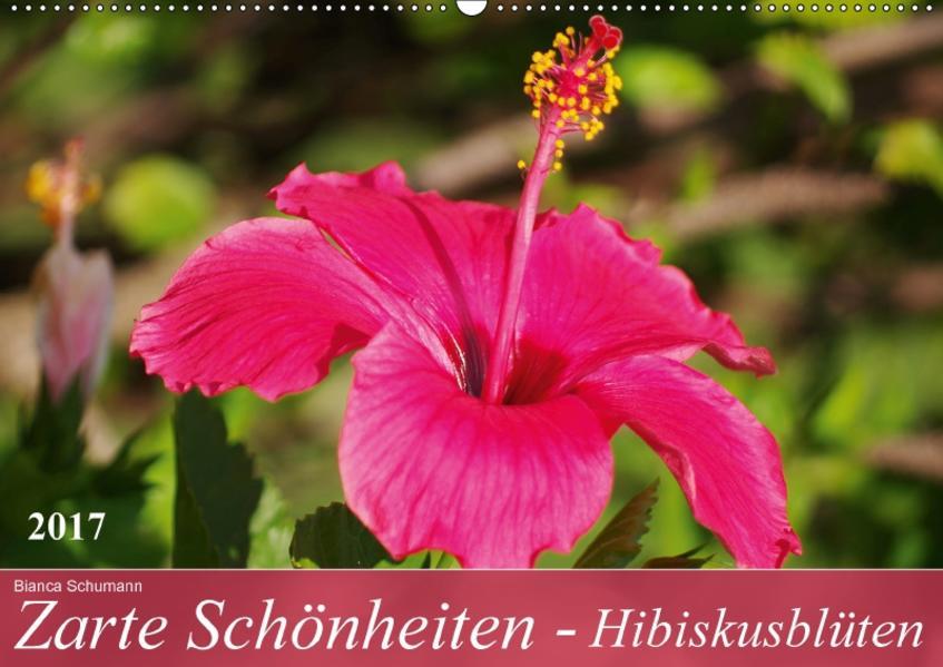 Zarte Schönheiten - HibiskusblütenCH-Version  (Wandkalender 2017 DIN A2 quer) - Coverbild