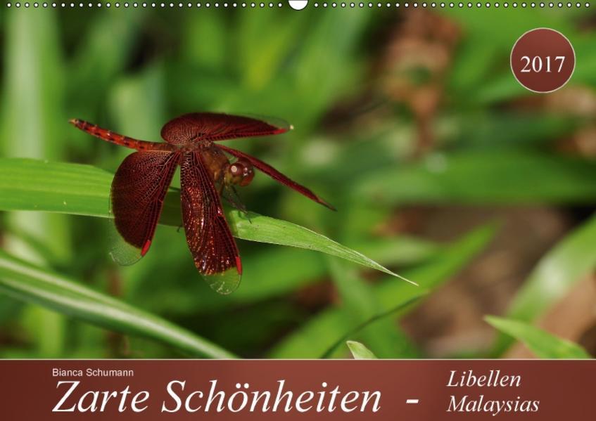 Zarte Schönheiten - Libellen MalaysiasCH-Version  (Wandkalender 2017 DIN A2 quer) - Coverbild