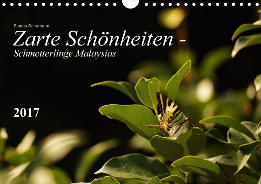 Zarte Schönheiten - Schmetterlinge MalaysiasCH-Version  (Wandkalender 2017 DIN A4 quer) - Coverbild