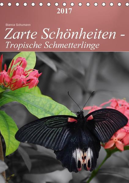 Zarte Schönheiten - Tropische SchmetterlingeCH-Version  (Tischkalender 2017 DIN A5 hoch) - Coverbild