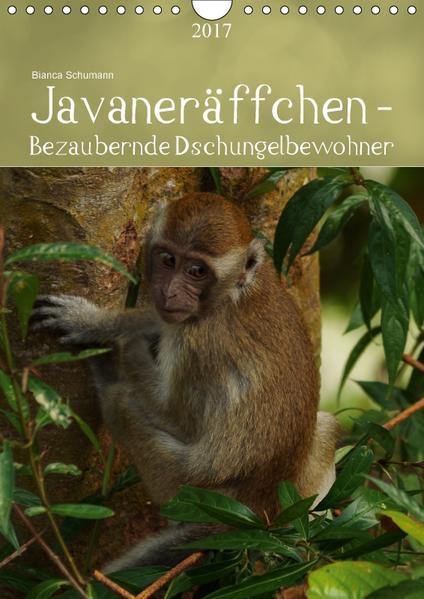 Javaneräffchen - Bezaubernde DschungelbewohnerCH-Version  (Wandkalender 2017 DIN A4 hoch) - Coverbild