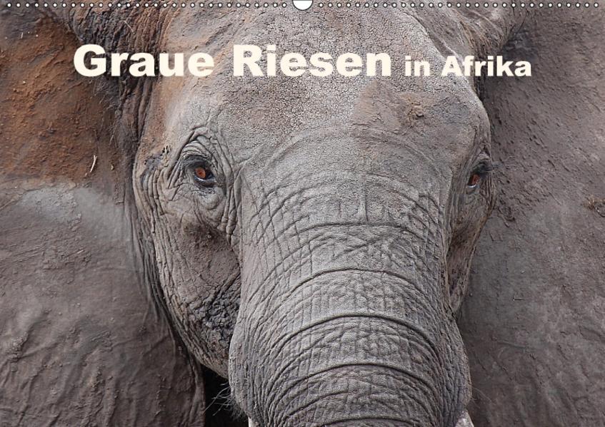 Graue Riesen in AfrikaAT-Version  (Wandkalender 2017 DIN A2 quer) - Coverbild
