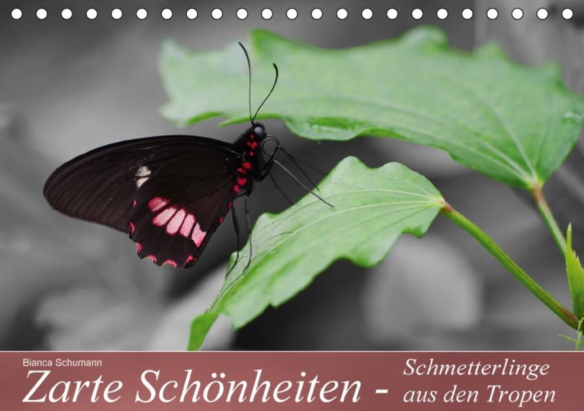 Zarte Schönheiten - Schmetterlinge aus den TropenAT-Version  (Tischkalender 2017 DIN A5 quer) - Coverbild