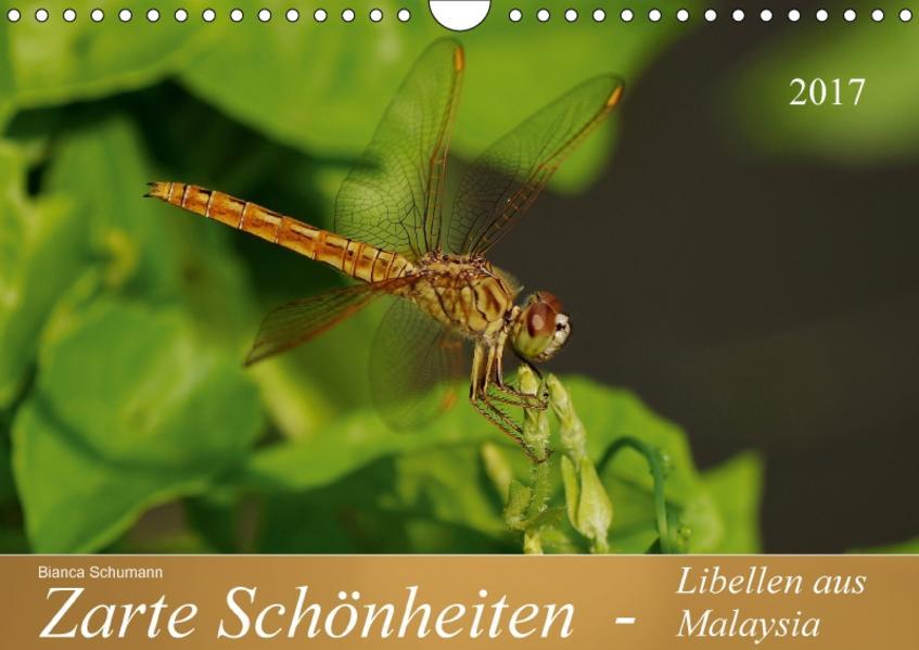 Zarte Schönheiten - Libellen aus MalaysiaAT-Version  (Wandkalender 2017 DIN A4 quer) - Coverbild