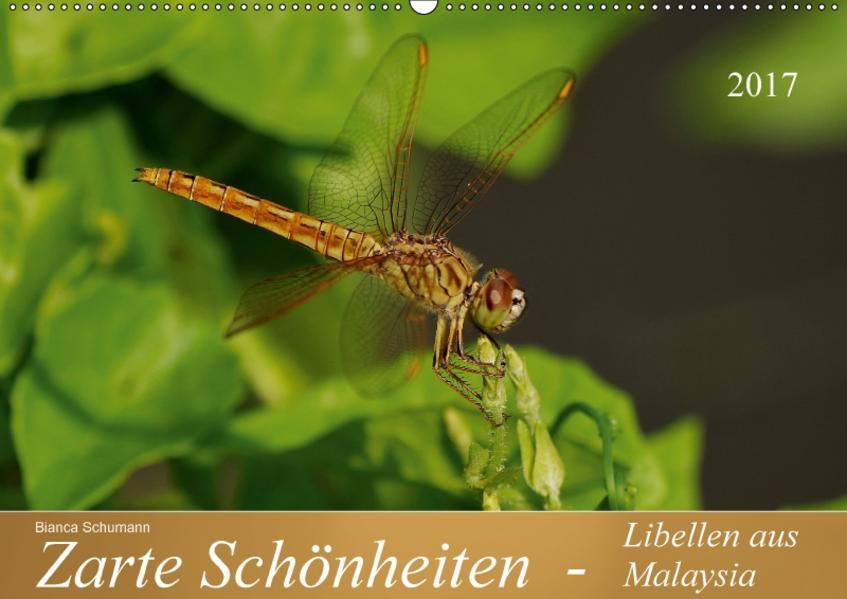 Zarte Schönheiten - Libellen aus MalaysiaAT-Version  (Wandkalender 2017 DIN A2 quer) - Coverbild