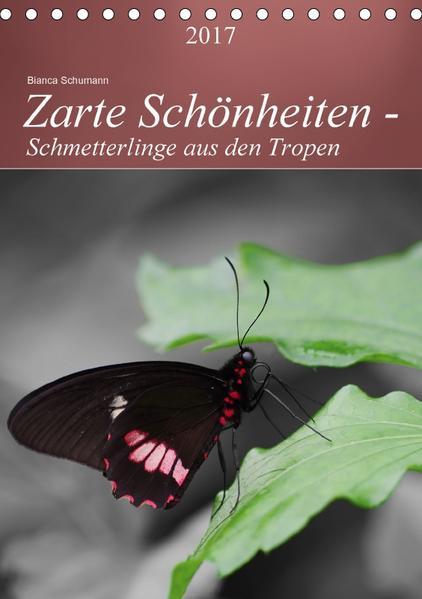 Zarte Schönheiten - Schmetterlinge aus den TropenAT-Version  (Tischkalender 2017 DIN A5 hoch) - Coverbild