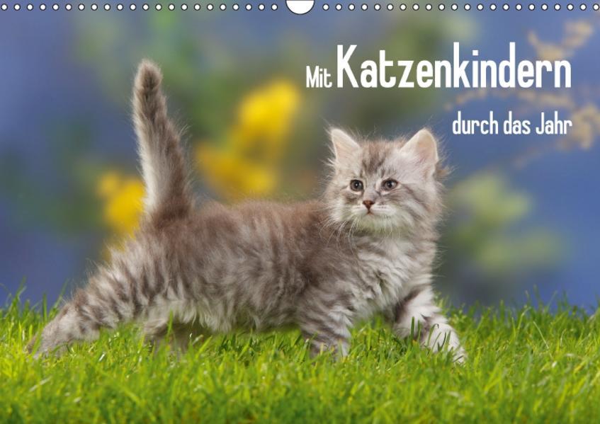 Mit Katzenkindern durch das Jahr (Wandkalender 2017 DIN A3 quer) - Coverbild