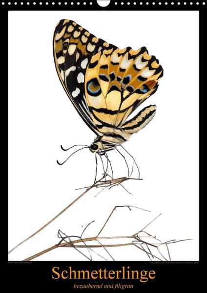 Schmetterlinge - bezaubernd und filigranCH-Version  (Wandkalender 2017 DIN A3 hoch) - Coverbild