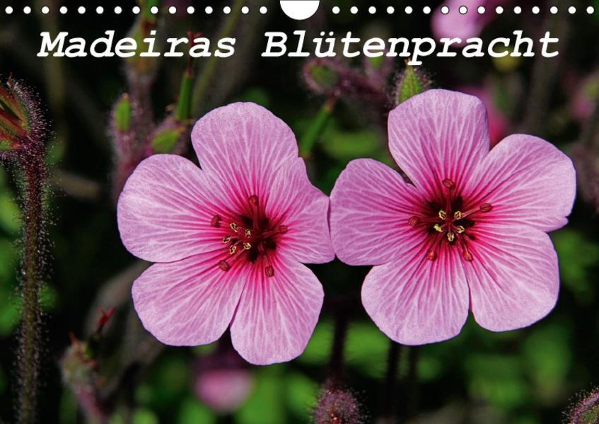 Madeiras Blütenpracht (Wandkalender 2017 DIN A4 quer) - Coverbild