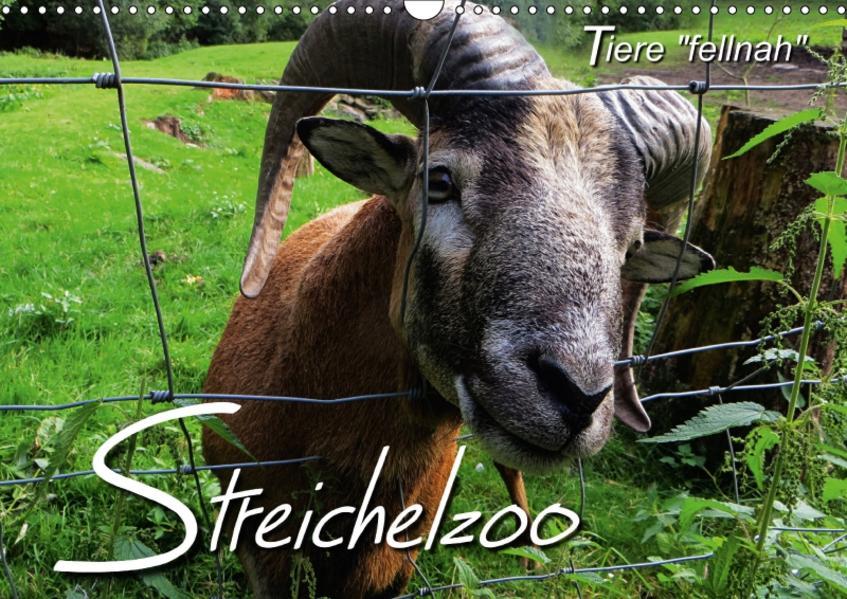 Streichelzoo - Tiere