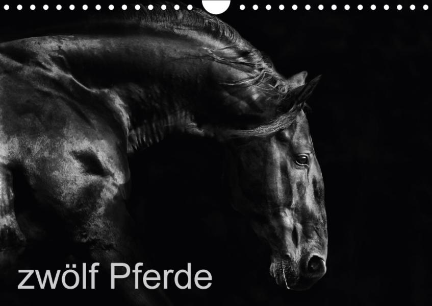 zwölf Pferde (Wandkalender 2017 DIN A4 quer) - Coverbild