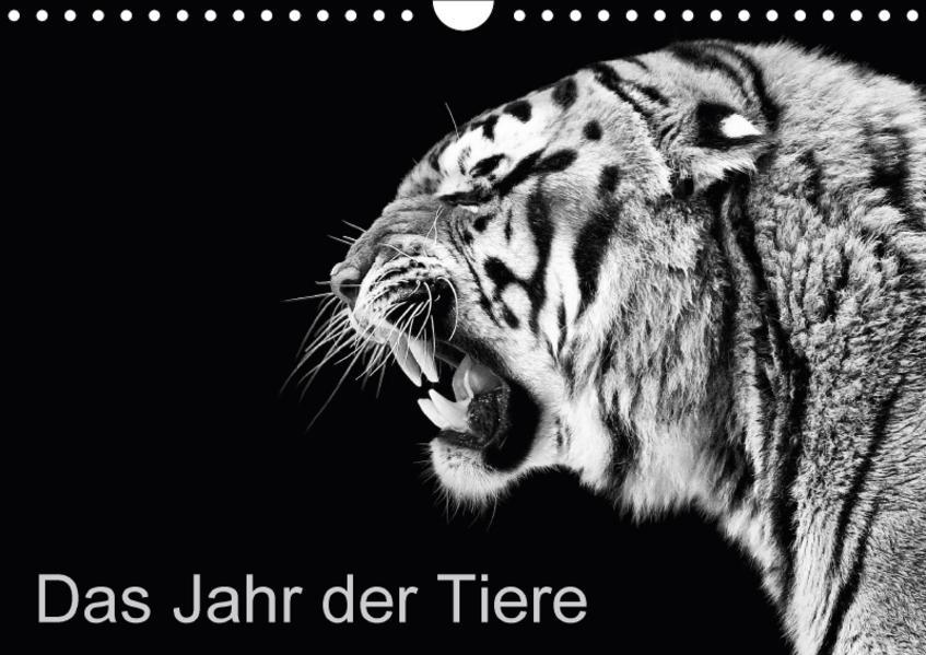 Das Jahr der Tiere (Wandkalender 2017 DIN A4 quer) - Coverbild