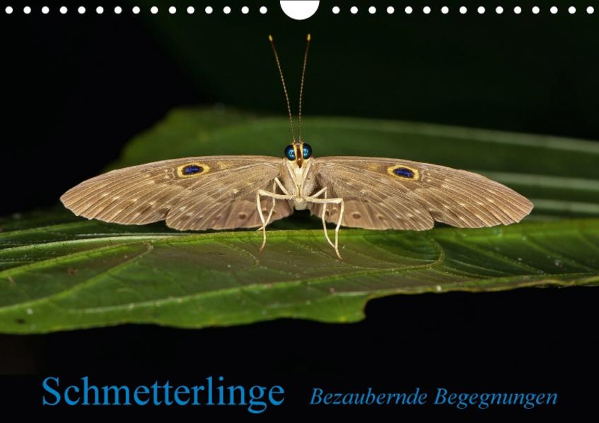 Schmetterlinge - Bezaubernde BegegnungenCH-Version  (Wandkalender 2017 DIN A4 quer) - Coverbild