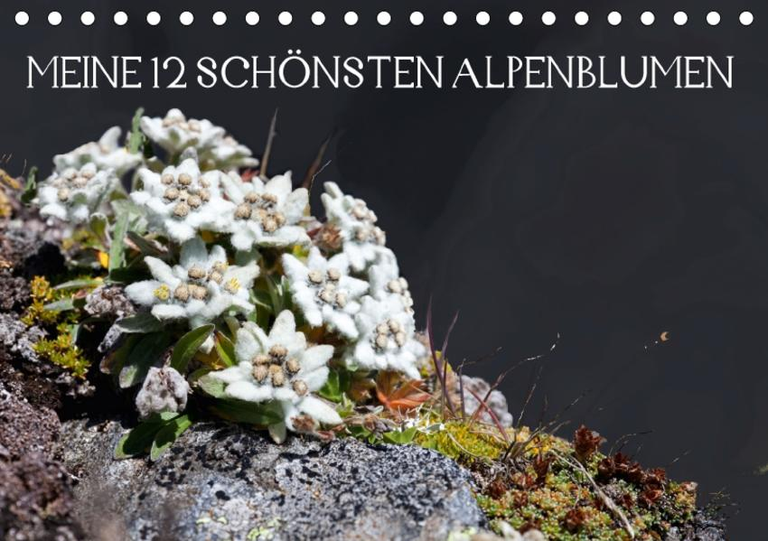 Meine 12 schönsten AlpenblumenAT-Version  (Tischkalender 2017 DIN A5 quer) - Coverbild