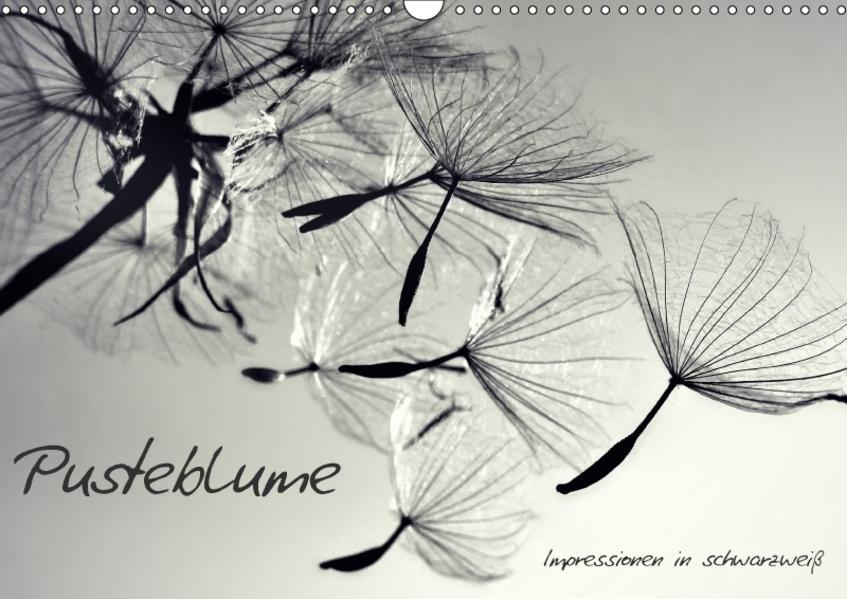 Pusteblume - Impressionen in schwarzweiß (Wandkalender 2017 DIN A3 quer) - Coverbild