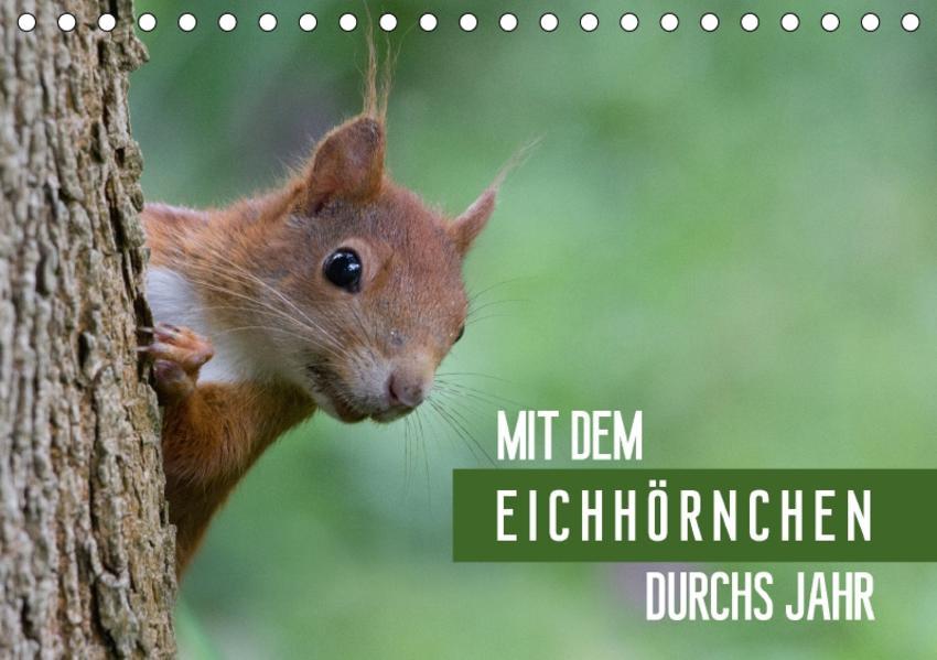 Mit dem Eichhörnchen durchs Jahr (Tischkalender 2017 DIN A5 quer) - Coverbild