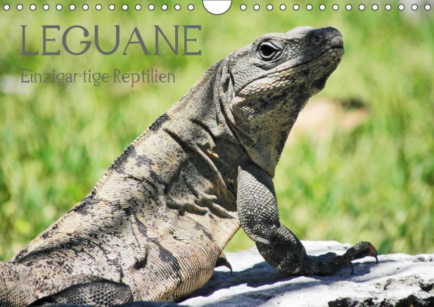 Leguane - Einzigartige Reptilien (Wandkalender 2017 DIN A4 quer) - Coverbild