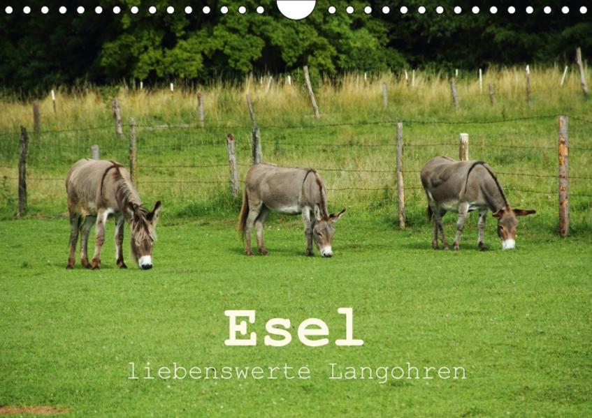Esel - liebenswerte Langohren (Wandkalender 2017 DIN A4 quer) - Coverbild