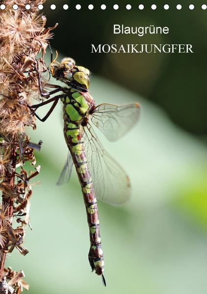 Blaugrüne Mosaikjungfer (Tischkalender 2017 DIN A5 hoch) - Coverbild