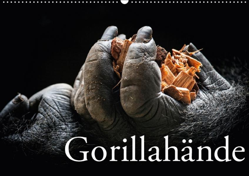 Gorillahände (Wandkalender 2017 DIN A2 quer) - Coverbild