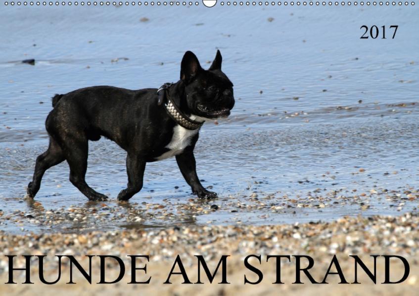 HUNDE AM STRAND (Wandkalender 2017 DIN A2 quer) - Coverbild