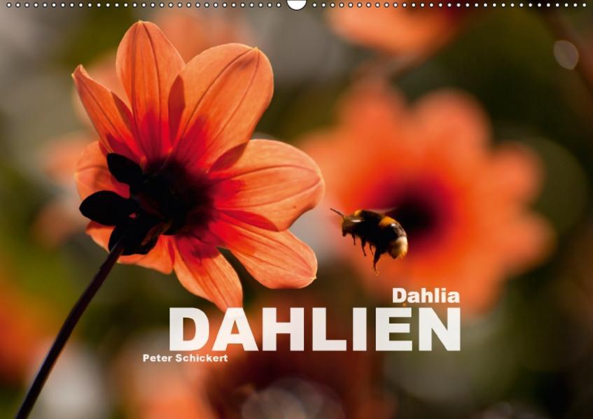 Dahlia - Dahlien (Wandkalender 2017 DIN A2 quer) - Coverbild