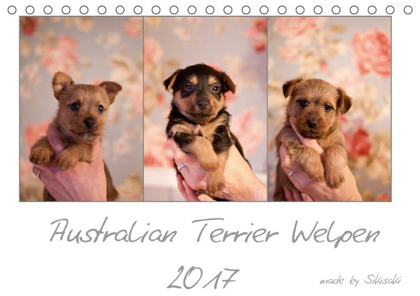 Australian Terrier Welpen (Tischkalender 2017 DIN A5 quer) - Coverbild