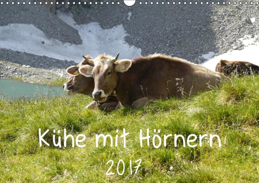Kühe mit Hörnern (Wandkalender 2017 DIN A3 quer) - Coverbild