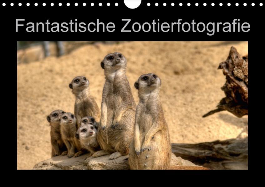 Fantastische Zootierfotografie (Wandkalender 2017 DIN A4 quer) - Coverbild