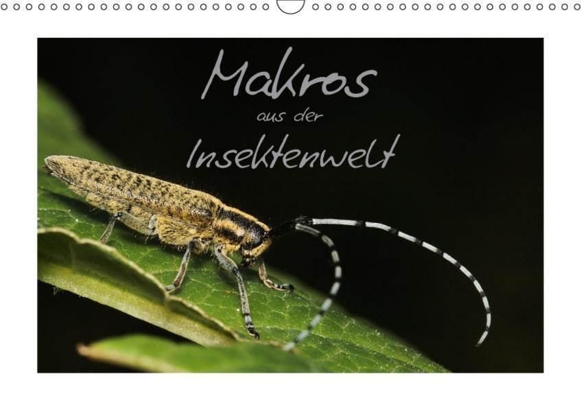 Makros aus der Insektenwelt (Wandkalender 2017 DIN A3 quer) - Coverbild