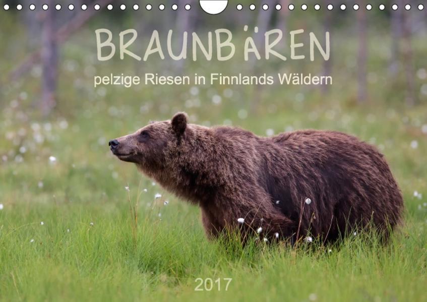 Braunbären - pelzige Riesen in Finnlands Wäldern (Wandkalender 2017 DIN A4 quer) - Coverbild