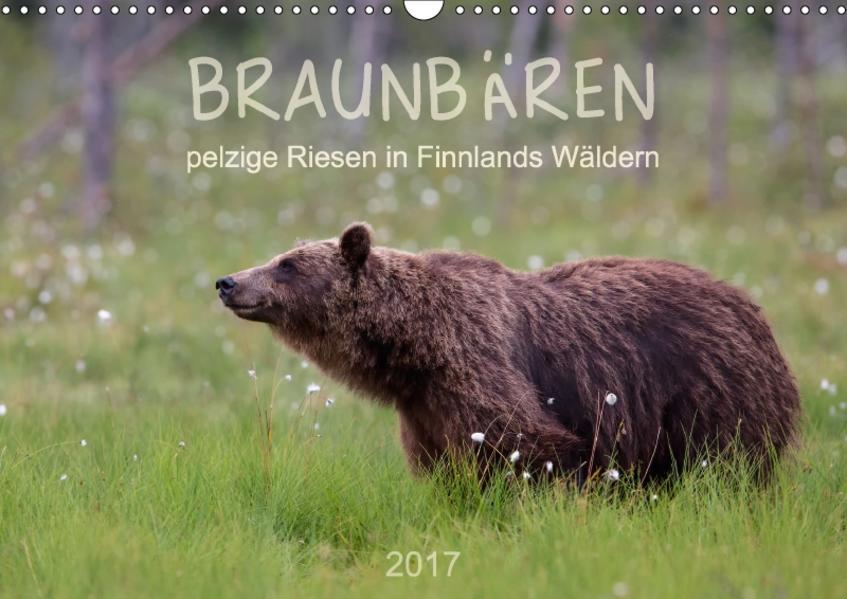 Braunbären - pelzige Riesen in Finnlands Wäldern (Wandkalender 2017 DIN A3 quer) - Coverbild