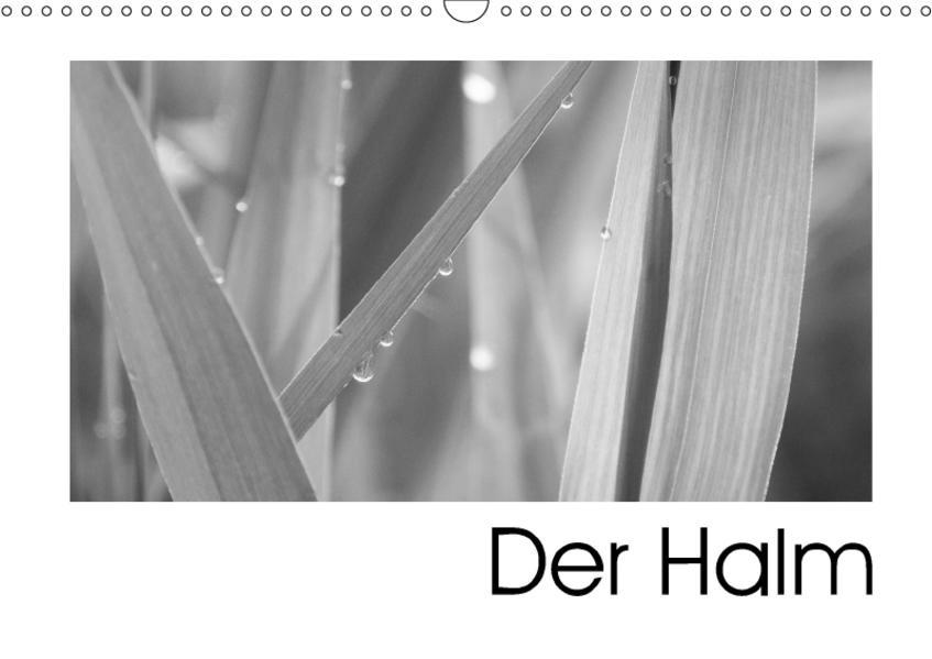 Der Halm (Wandkalender 2017 DIN A3 quer) - Coverbild